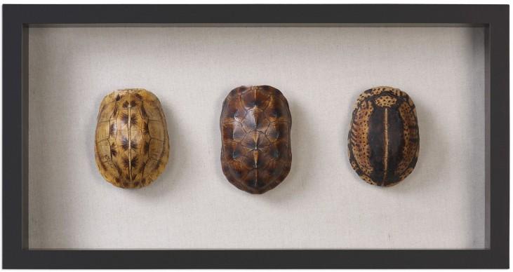Tortoise Shells Brown Shadow Box