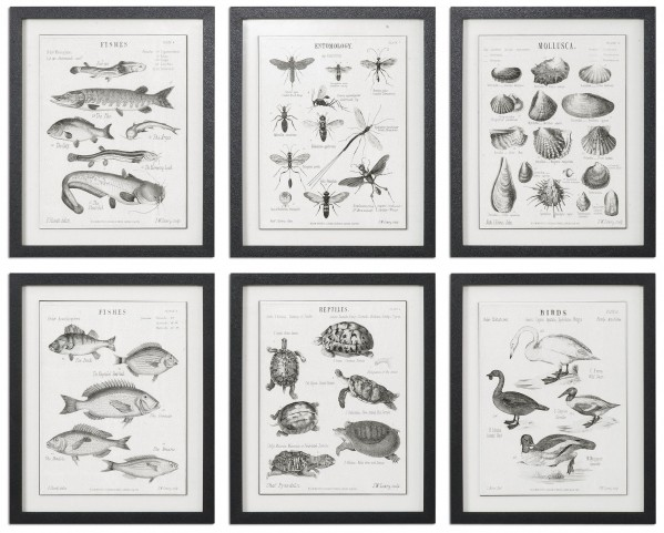 Science Studies Vintage Art Set of 6