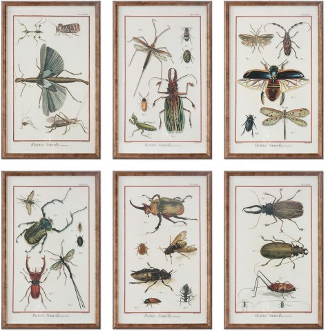 Multi Insect Prints Set of 6