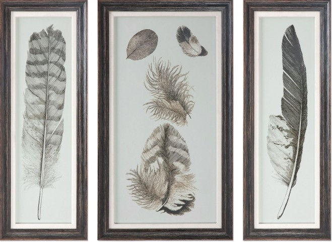 Feather Study Prints Set of 6