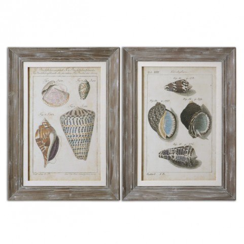 Vintage Shell Study Framed Art Set of 2