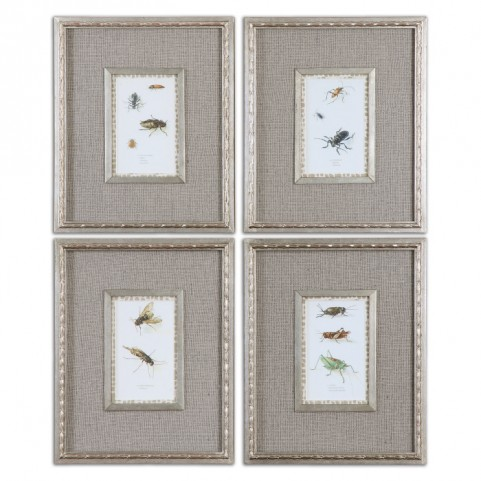 Insect Study Framed Art Set of 4