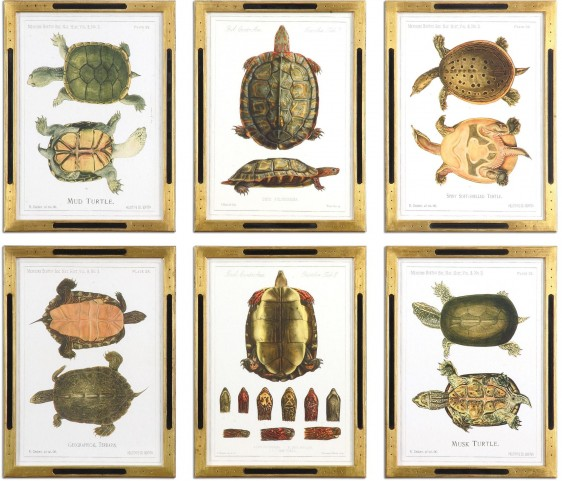 Tortoise Study Framed Art Set of 6