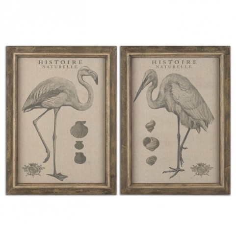 Natural History Framed Art Set of 2