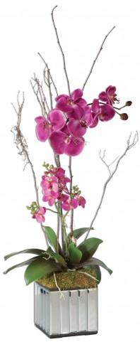 Fuchsia Kaleama Orchids
