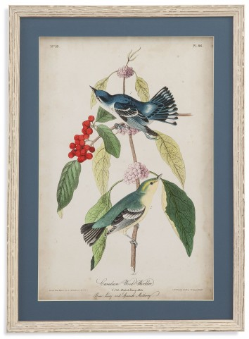 Cerulean Wood Warbler Wall Art