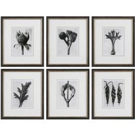 Botany Specimen Prints Set of 6