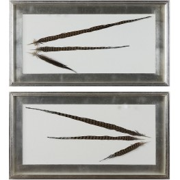 Pheasant Feathers Wall Art Set of 2