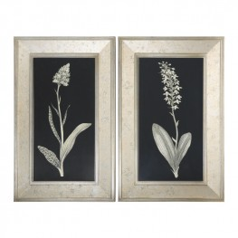 Antique Floral Study Framed Art Set of 2