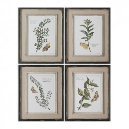 Butterfly Plants Framed Art Set of 4