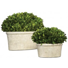 Oval Domes Preserved Boxwood Set of 2