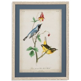 Black-Throated Blue Wood Warbler Wall Art