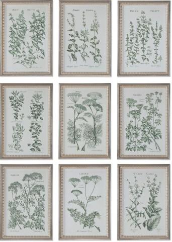 Herb Garden Prints Set of 9