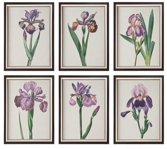 Iris Beauties Floral Prints Wall Art Set of 6