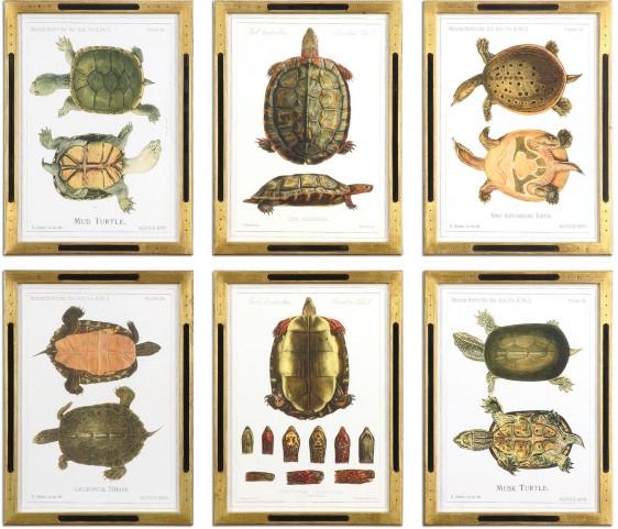 Tortoise Study Framed Art Set of 6