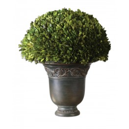 Globe Preserved Boxwood